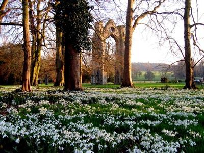 http://www.walsinghamvillage.org/wp-content/uploads/2011/02/walsingham_snowdrops1.jpg